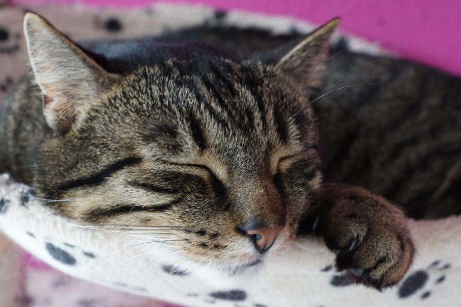 犬を3匹、猫を2匹飼った経験からガチで勧めるペットの医療保険(トイアンナ)